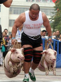 pigs farmers walk