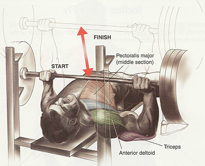 Chest-Workout-Tips (3)