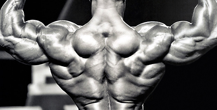 Building-a-Bodybuilder-Back